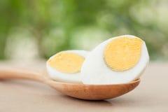 Fresh egg on nature background Stock Photography