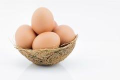 Fresh egg on nest isolated on white background Royalty Free Stock Photo