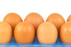 Fresh egg Stock Photo