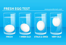 Fresh Egg Test Royalty Free Stock Images