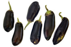 Fresh eggplant Stock Photography