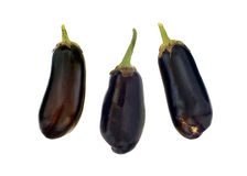 Fresh eggplant Stock Images