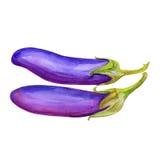 Fresh eggplant aubergine vegetable  on white background Royalty Free Stock Photos