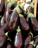 Fresh eggplant. A close up view of some big fresh eggplant, portrait cut royalty free stock photos