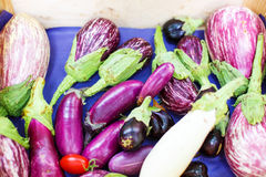 Fresh eggplants, aubergine vegetables on street market in Proven. Ce, France Stock Image