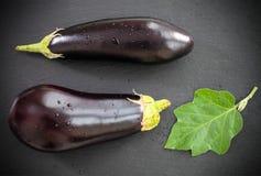 Fresh eggplants with leaves Stock Photos