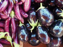 Fresh Eggplants. Fresh red stripe and purple eggplants  for sale at weekly Greek farmers market or laiki Stock Photography