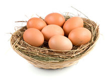 Fresh Eggs Stock Images