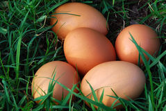 Free Fresh Eggs Stock Image - 14636181