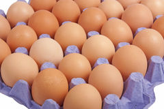 Fresh eggs. In carton package isolated on white background with clipping path Royalty Free Stock Photos
