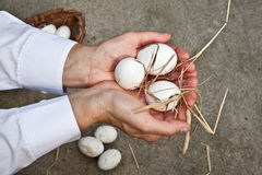 Fresh eggs. Farmer shows three eggs on his hands Royalty Free Stock Images