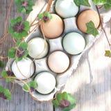 Fresh eggs Stock Images