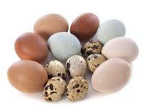 Free Fresh Eggs Royalty Free Stock Image - 39561116