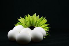 Fresh eggs. Eggs and colorful daisy isolated on black stock photo