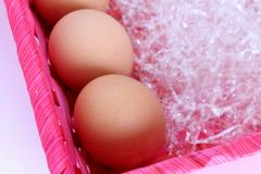 Fresh eggs into a basket Royalty Free Stock Photography