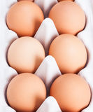 Fresh eggs Royalty Free Stock Photo