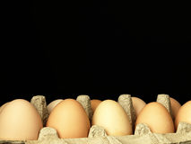 Fresh eggs in the box. Stock Image