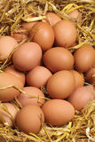 Fresh Eggs. Fresh brown Hens' eggs in straw Royalty Free Stock Photos