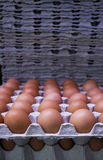Fresh eggs on cardboard trays Royalty Free Stock Photo