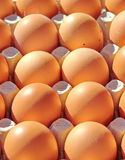Fresh eggs in carton Stock Image