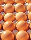 Fresh eggs in carton Stock Image