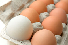 Fresh Eggs In A Carton Stock Photo