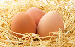 Fresh eggs close up. In the nest Royalty Free Stock Image