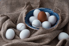 Fresh eggs are collected for cooking Stock Images