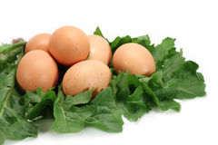 Fresh eggs on dandelion leaves Royalty Free Stock Photos
