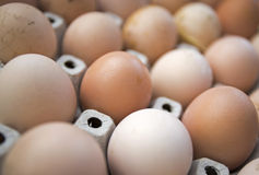 Fresh eggs in a egg carton Stock Image