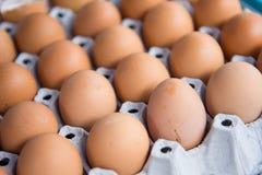 Fresh eggs in eggs tray Royalty Free Stock Photos