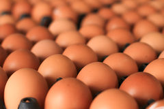 Eggs in carton Stock Photography