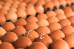 Eggs in carton. From farm Stock Photo