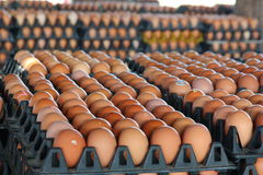 Fresh eggs from farm Royalty Free Stock Images