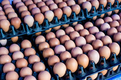 Fresh eggs from farm at wholesale market. Eggs from chicken farm in the package that preserved in panel wholesale market Royalty Free Stock Photos