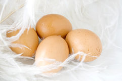 Fresh eggs on feathers Royalty Free Stock Image
