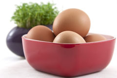 Fresh eggs with fresh cress on white Stock Photo