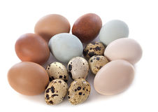 Fresh eggs. In front of white background Royalty Free Stock Image