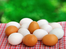 Fresh eggs in the garden Royalty Free Stock Photo