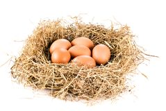 Fresh eggs in hay Royalty Free Stock Photography
