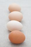 Fresh eggs in a line Stock Photography