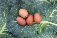 Fresh eggs, local collards. Royalty Free Stock Images