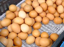 Fresh eggs at market Royalty Free Stock Photography