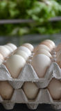Fresh eggs in a market Stock Images