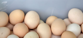 Fresh eggs in a market Royalty Free Stock Photo