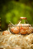 Fresh eggs in a metallic basket on straw Stock Image