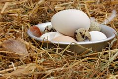 Fresh eggs in the old bowl Royalty Free Stock Photo