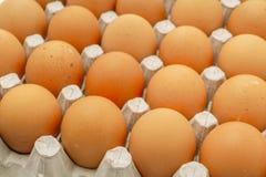 Fresh eggs in package . Fresh eggs in package Stock Image