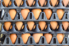 Fresh eggs in packaging stacked. Closeup Royalty Free Stock Image