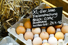 Fresh eggs in paper carton Royalty Free Stock Photo